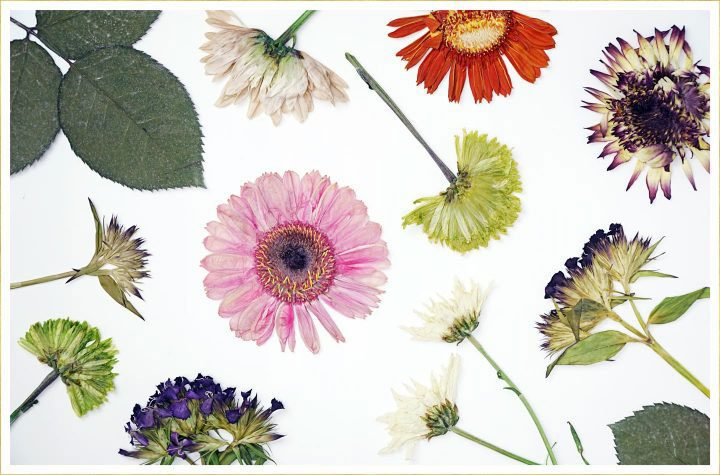 overhead view of pressed flowers